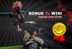 bonus 7xwin sabungayam