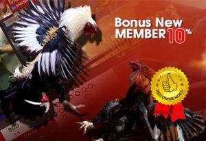 bonus-newmember-sabungayam