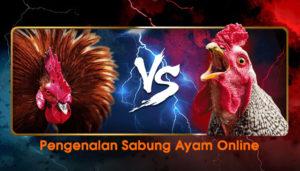 Pengenalan Sabung Ayam Online